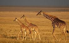 In-depth Masai Mara
