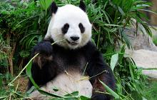 Luxury China Honeymoon Yangtze & Pandas
