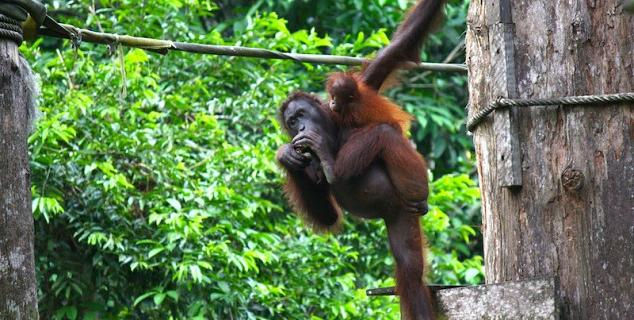 Borneo Wildlife Tours
