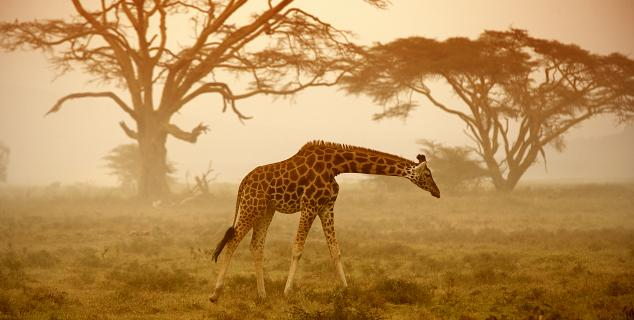 Dawn on the Mara