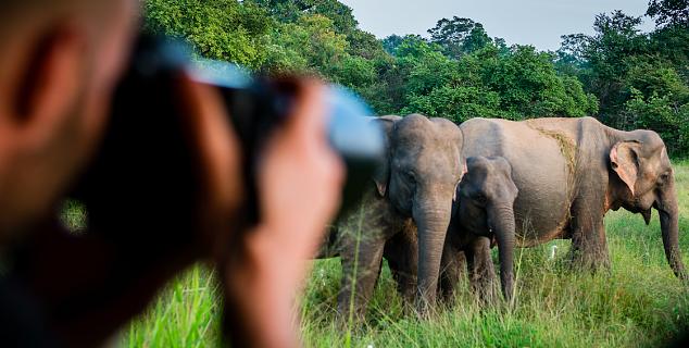 Sri Lanka in Depth Tour | Jasmine Holidays