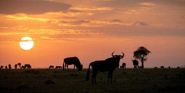 Sunset on the Mara steppes